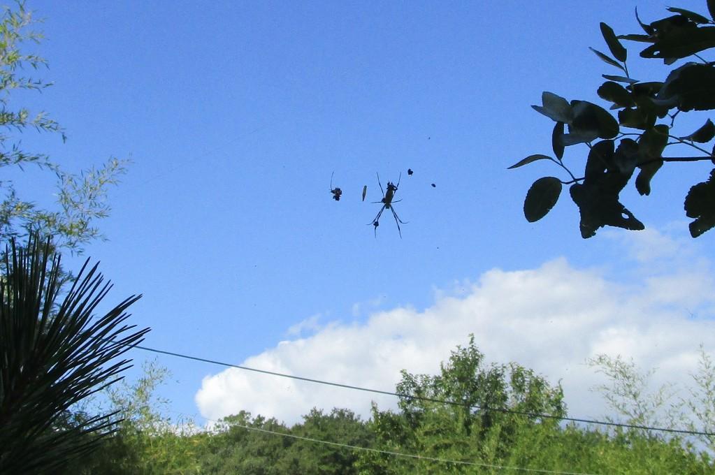 거미줄2.jpg