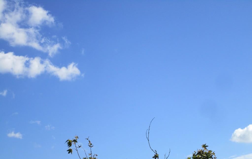 구름5.jpg