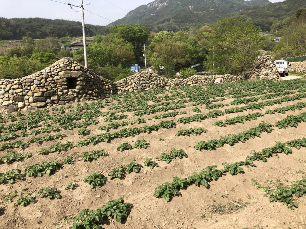 [크기변환]감자밭_06.jpg